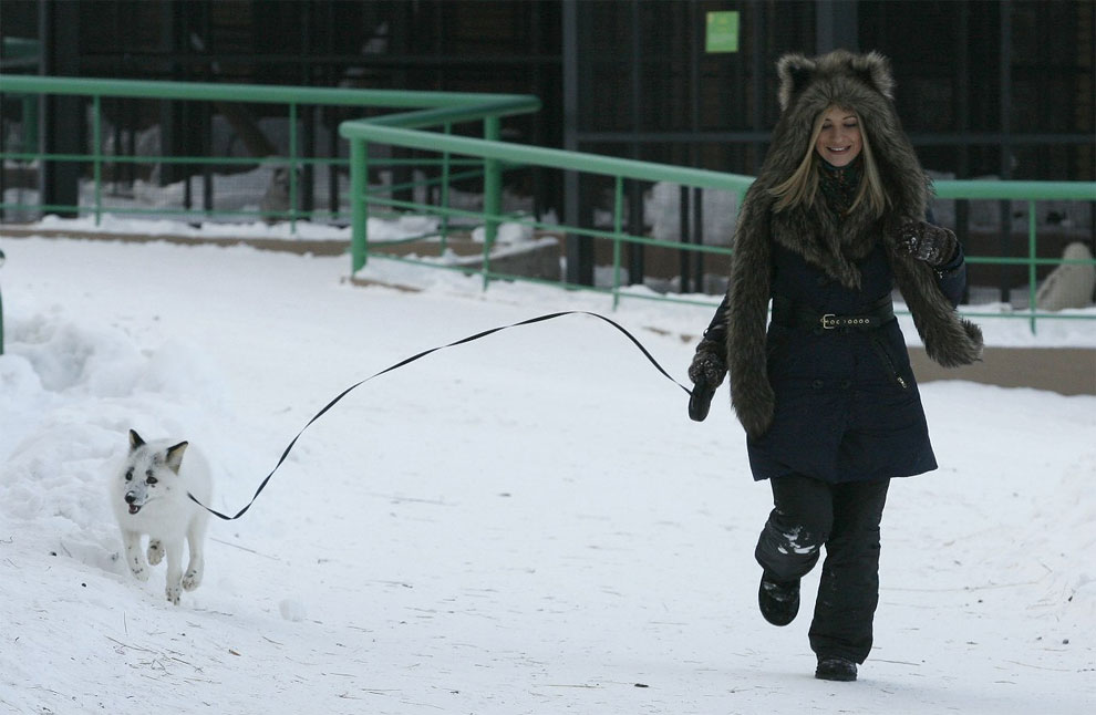 Spring-And-A-Girl-Cute-Friendship-Between-A-Snow-Fox-And-A-Human-01