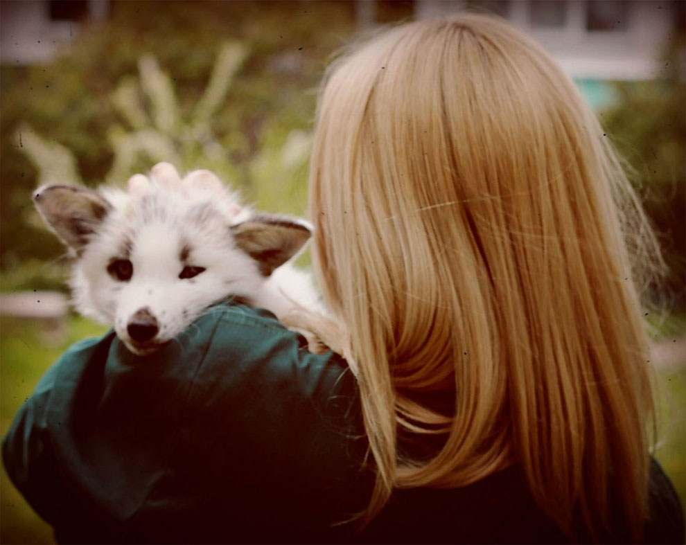 Spring-And-A-Girl-Cute-Friendship-Between-A-Snow-Fox-And-A-Human-28