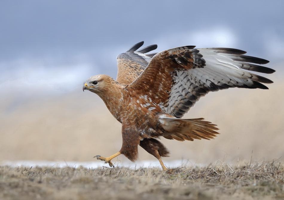The-world-of-birds-Radoslav-Tsvetkov-01