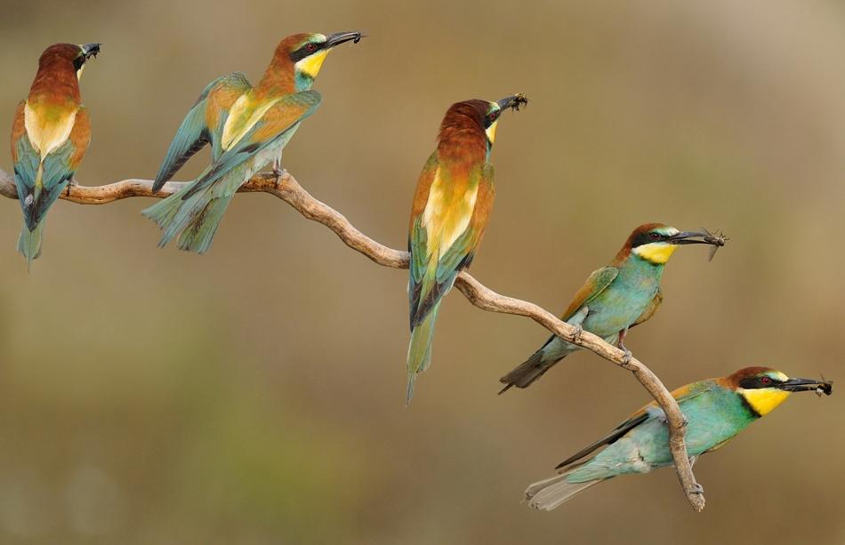 The-world-of-birds-Radoslav-Tsvetkov-05