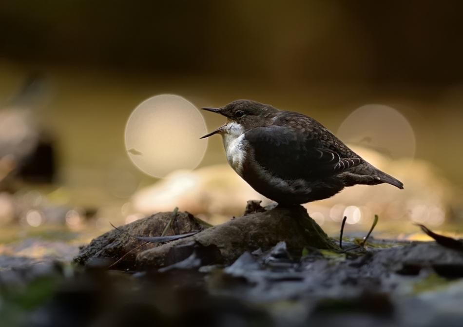 The-world-of-birds-Radoslav-Tsvetkov-06