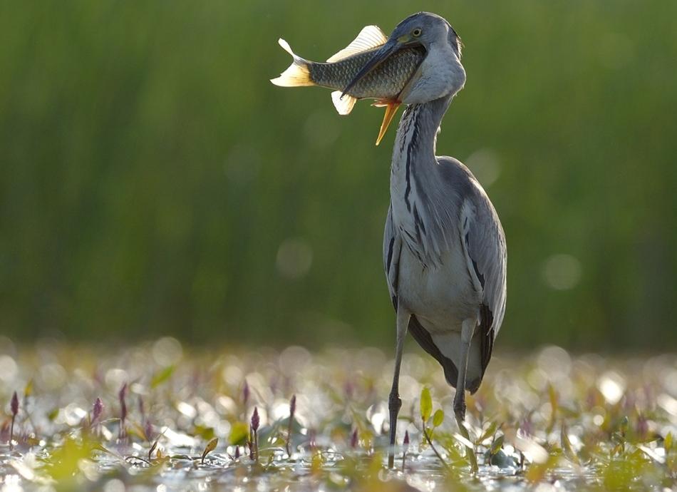 The-world-of-birds-Radoslav-Tsvetkov-09