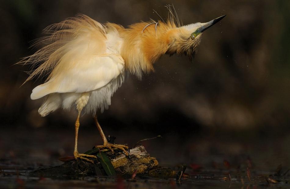 The-world-of-birds-Radoslav-Tsvetkov-18