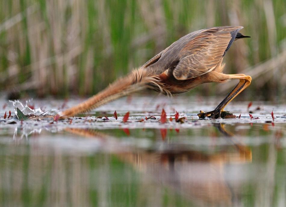The-world-of-birds-Radoslav-Tsvetkov-20