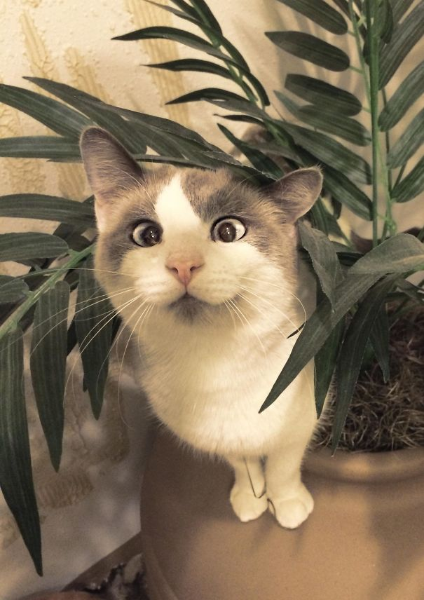 funny-crossed-eyed-cats-derpy-googly-eyes-28-57176a048e045__605