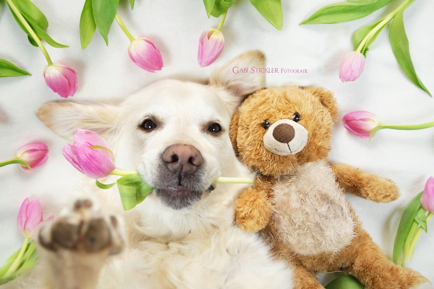 i-photograph-my-dogs-enjoyng-spring-time-2__880
