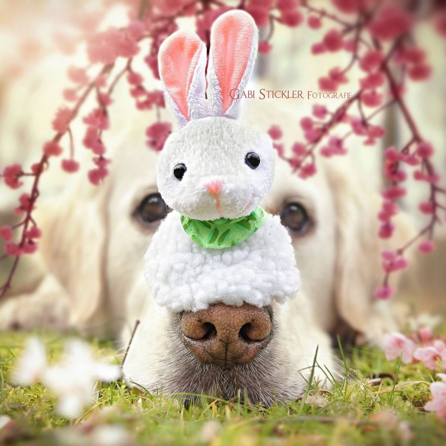 i-photograph-my-dogs-enjoyng-spring-time-4__880 (1)