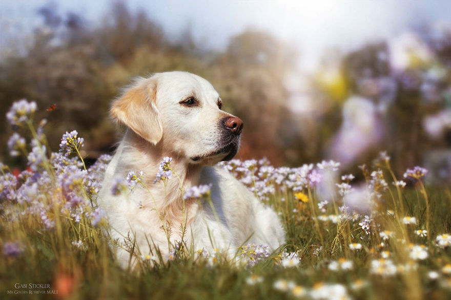 i-photograph-my-dogs-enjoyng-spring-time-5__880 (1)