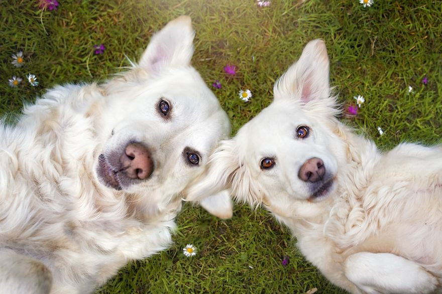 i-photograph-my-dogs-enjoyng-spring-time-9__880