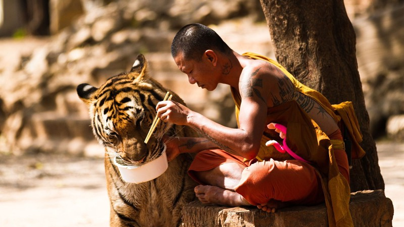 monk-tiger-1920x1080