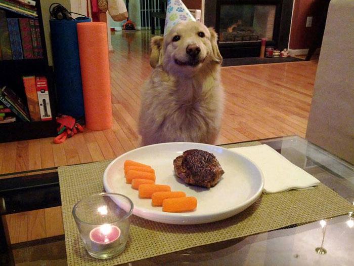 pets-birthday-parties-2-57068ce2bfce9__700