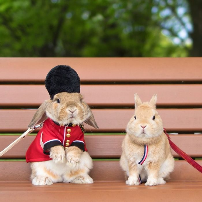 worlds-most-stylish-bunny-puipui-28-571f65a988a4f__700