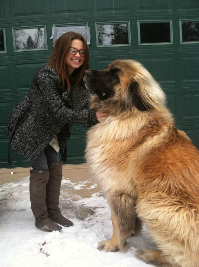 352032xcitefun-leonberger-dog-1-765x1024
