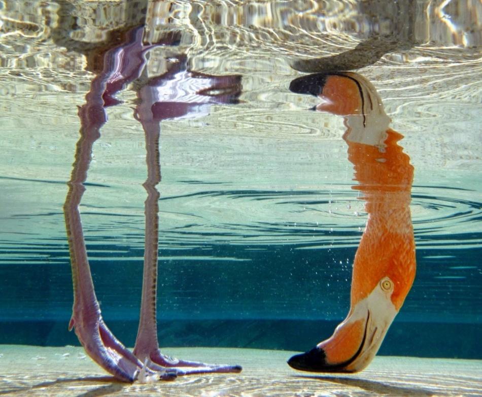 9464215-1000-1463497190-Flamingo_PaigeKlee_0