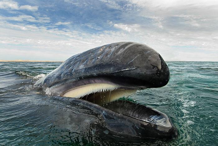morskie-zhyvotnye-28-1
