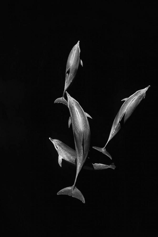 morskie-zhyvotnye-28-4-663x990