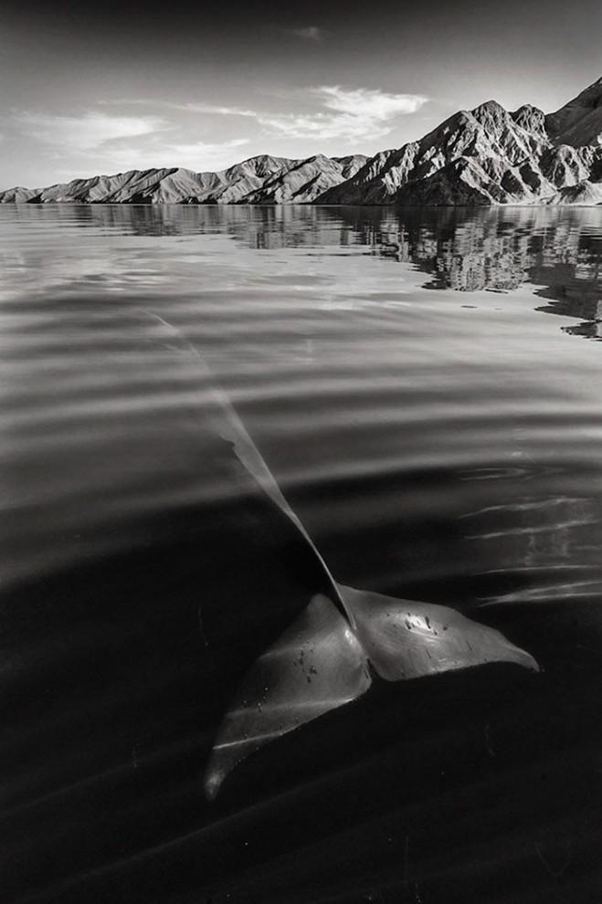 morskie-zhyvotnye-28-7-659x990