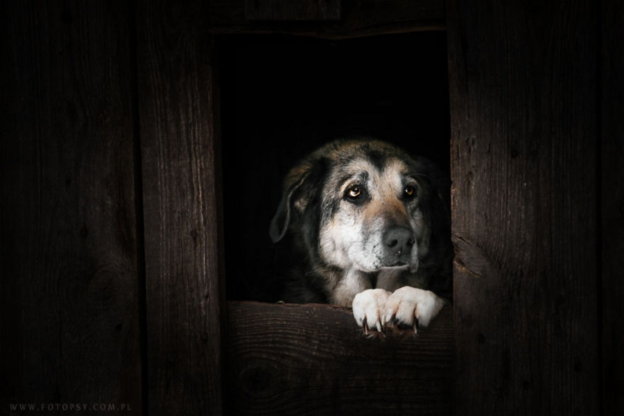 photograph_the_dog_emotion_that_you_see_in_their_eyes_04