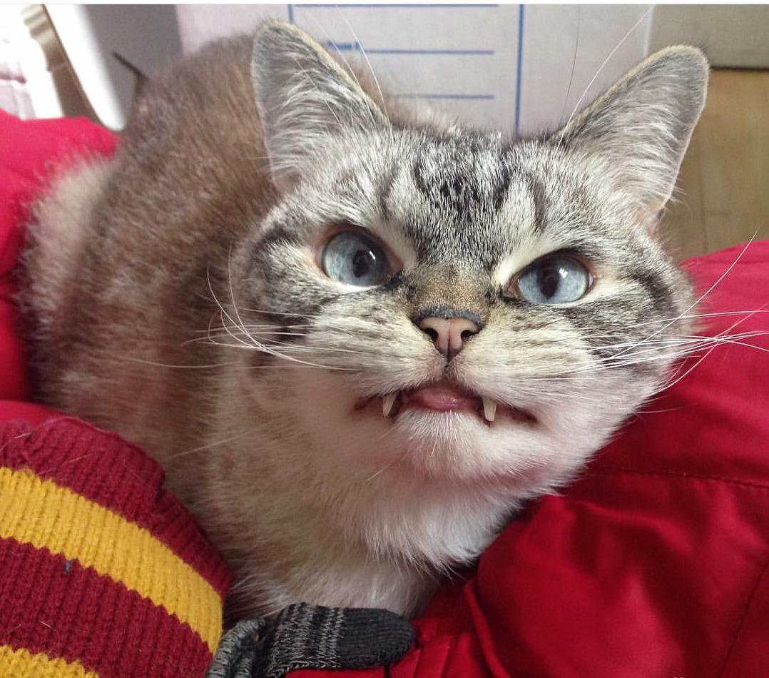 vampire_angry_cat_loki_01