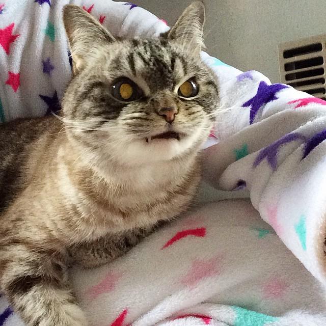 vampire_angry_cat_loki_05