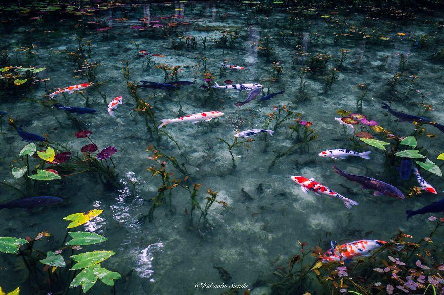 japanese_pond_07
