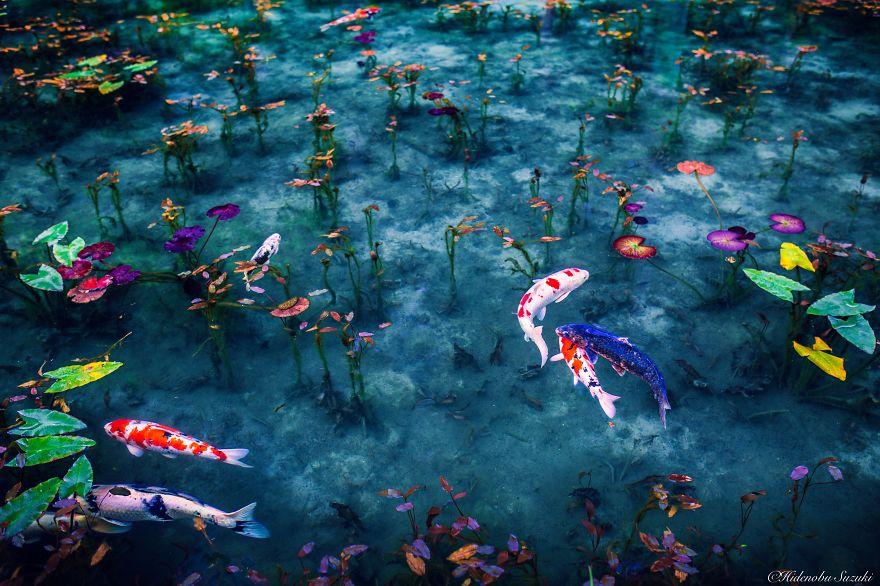 japanese_pond_09