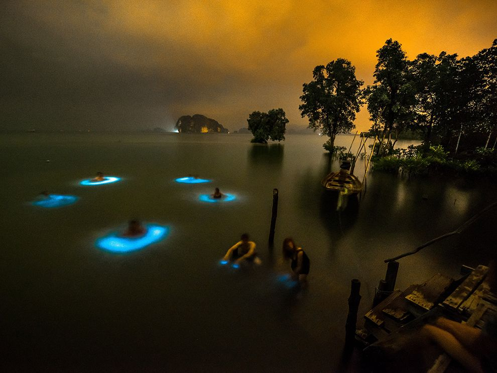 thailand-bioluminesence_95158_990x742