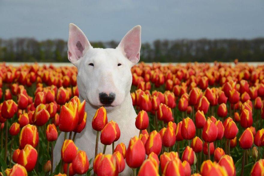 Claire-Tulips-0001-57b7954fa4aea__880