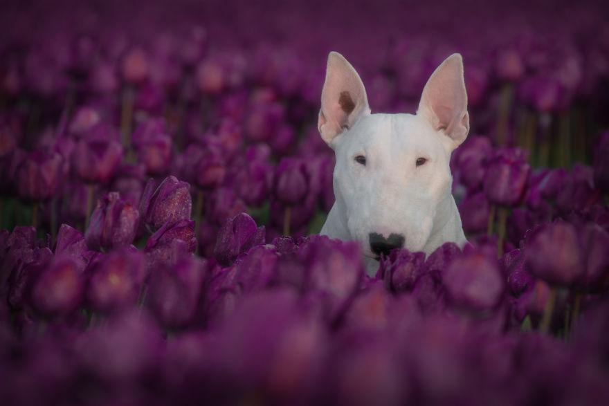 Purple-1-57b7955a406ab__880