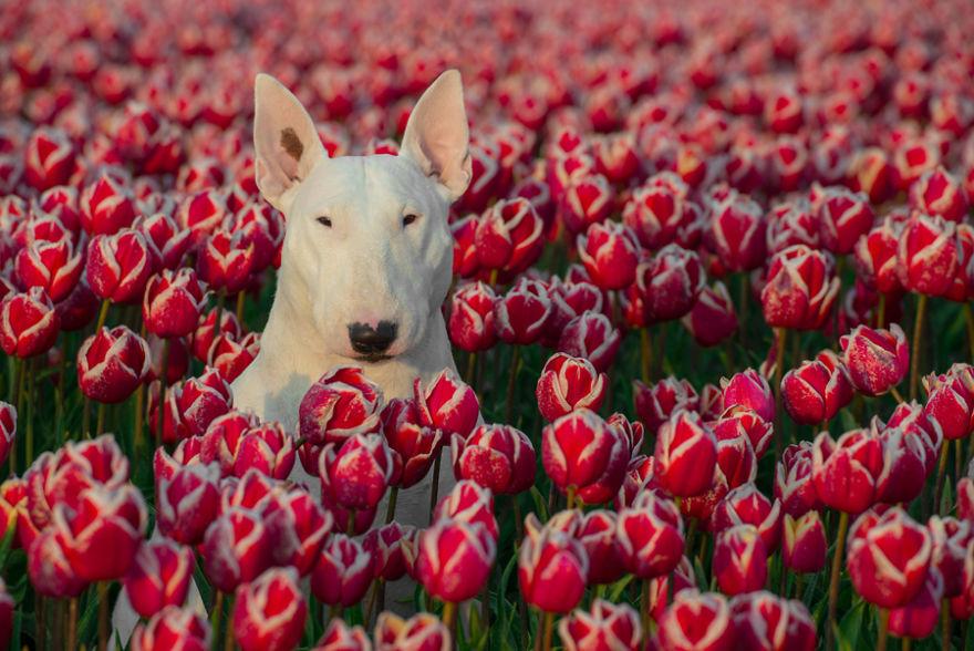 Tulips-2016-0002-57b7955c7b025__880