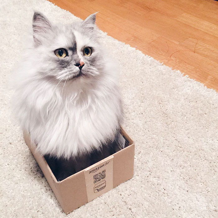 adopted-cat-fur-persian-halloalice-23