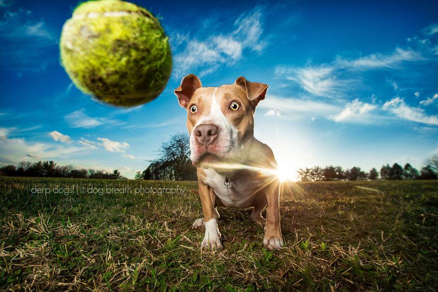 derpdogs-prince-57aa4a4843fae__880