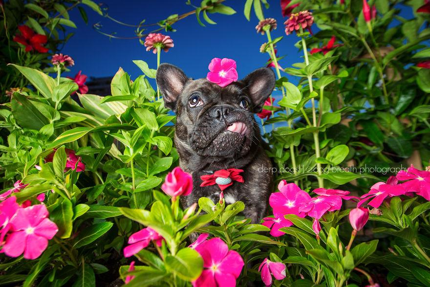 derpdogs-ruby-57aa4a4b8f2f5__880