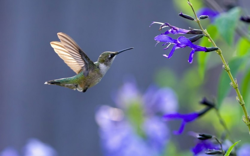 photos-of-hummingbird-10