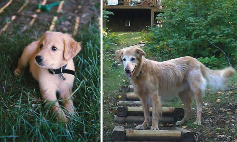 before-after-pets-growing-old-first-last-photos-vinegret-1