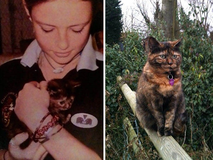 before-after-pets-growing-old-first-last-photos-vinegret-15