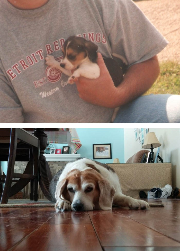 before-after-pets-growing-old-first-last-photos-vinegret-4