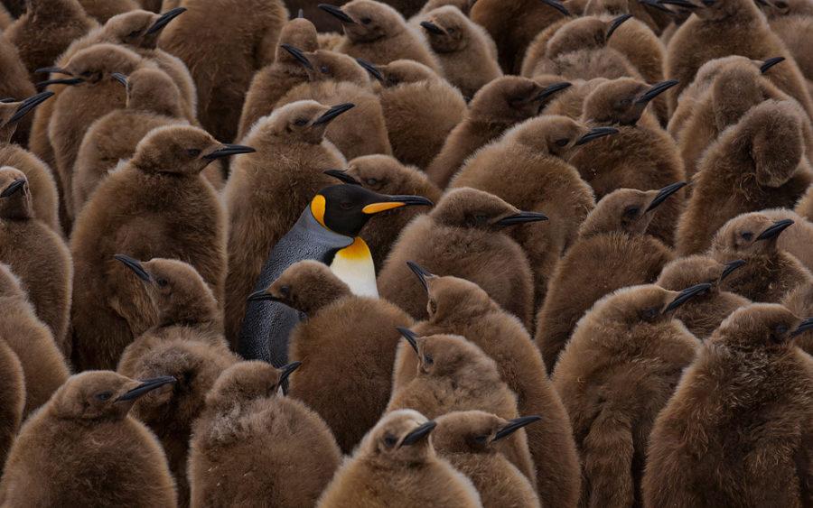 konkurs-fotografij-zhivotnyx-ot-londonskogo-zooparka-2016-3