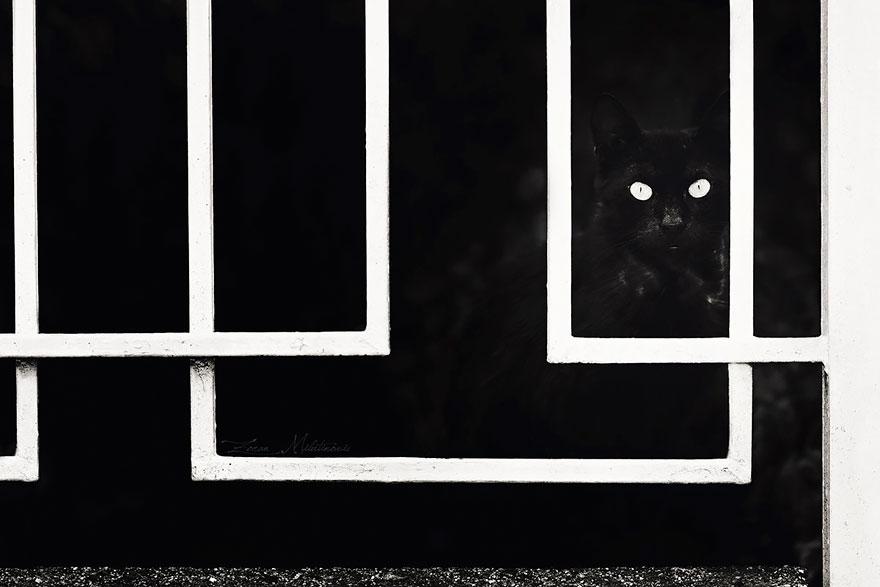 mysterious-cat-103-57c03e7d476fb__880