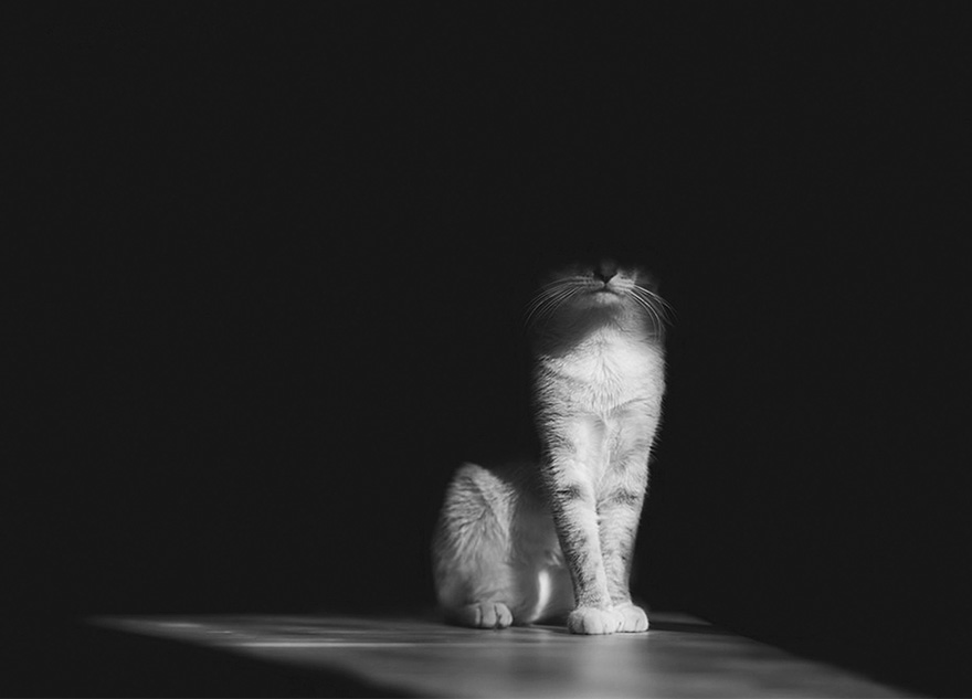 mysterious-cat-photography-black-and-white-28-57bffb1762bfc__880