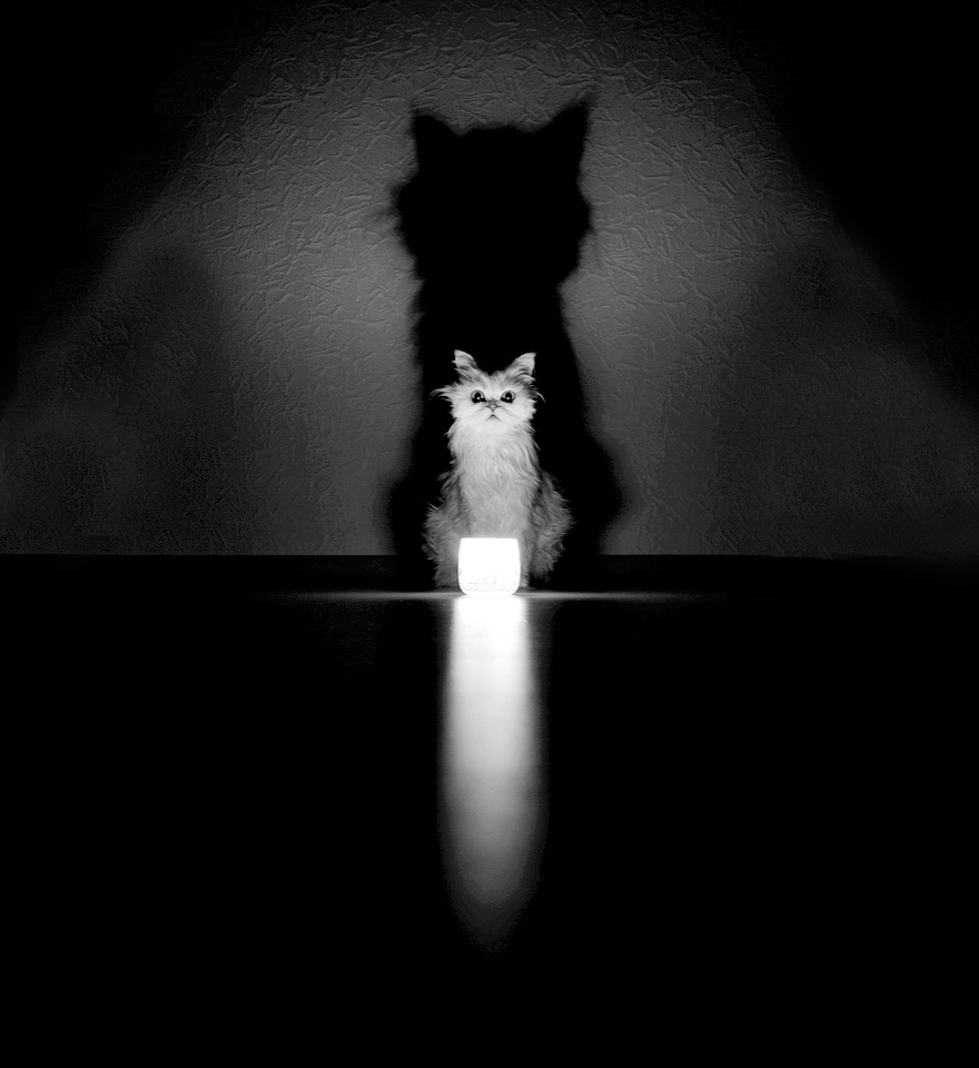 mysterious-cat-photography-black-and-white-68-57c5830d775b6__880