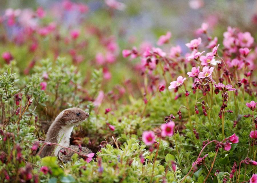 pobediteli-konkursa-fotografij-dikoj-prirody-wildlife-photographer-of-the-year-2016-12