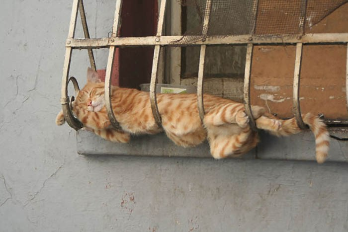 sleeping-cats-vinegret-20
