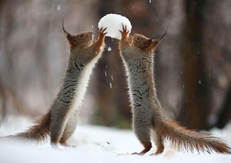 squirrel-photography-russia-vadim-trunov-vinegret-15
