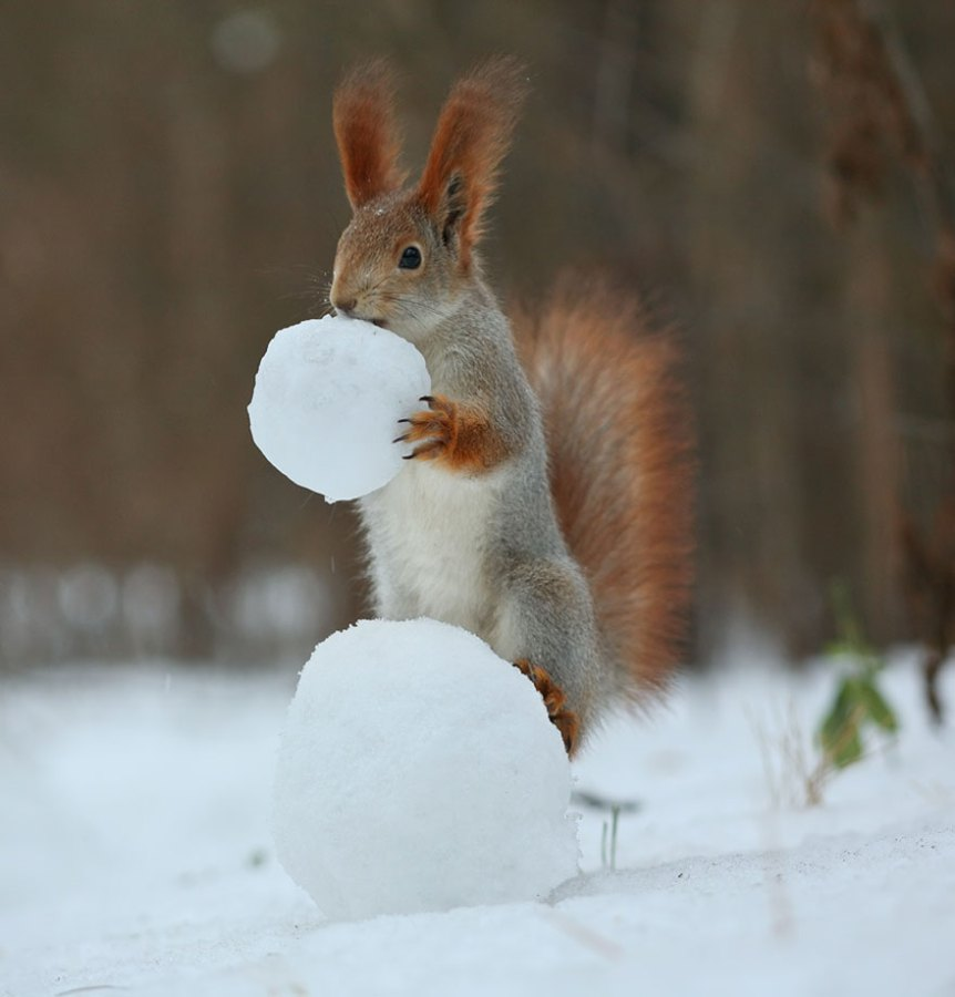 squirrel-photography-russia-vadim-trunov-vinegret-3