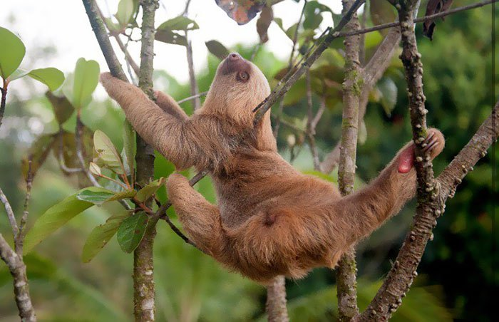 cute-sloths-vinegret-8