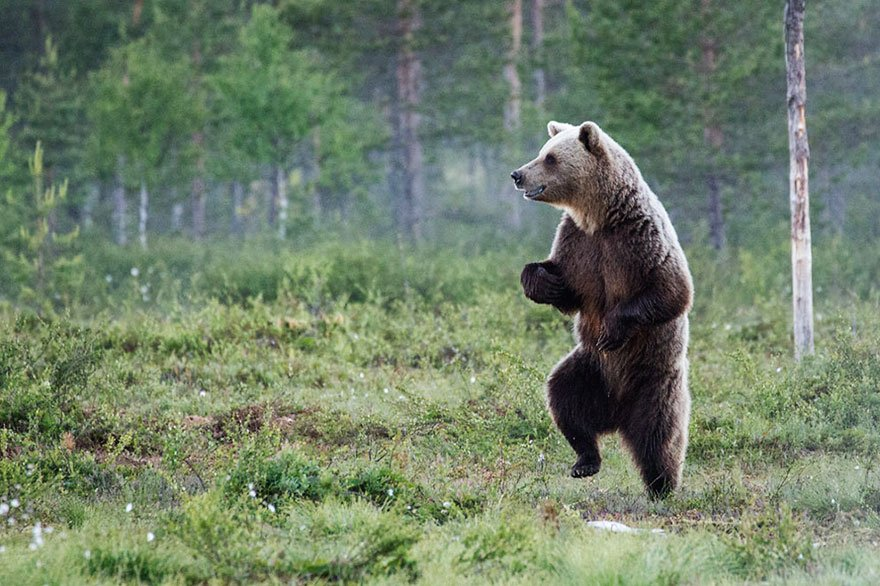foto-ot-uchastnikov-konkursa-comedy-wildlife-photography-awards-2016-8