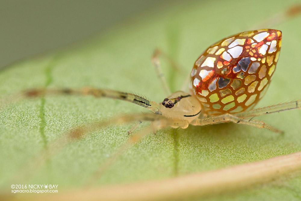 neobychnye-zerkalnye-pauki-2