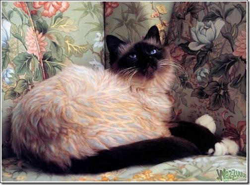 paintcat-23