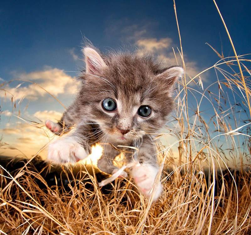 pounce-new-kitten-book-by-seth-casteel-vinegret-6